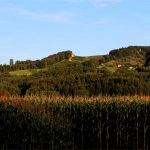 Radweg mit Blick auf Weingärten (ca. 800m vom Haus entfernt aufgenommen)
