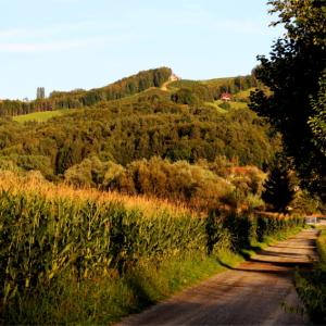 Idyllischer Radweg (ca. 500m vom Haus entfernt aufgenommen)