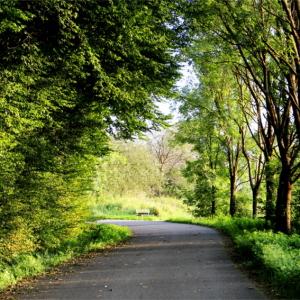 Radweg (ca. 50m vom Haus entfernt aufgenommen)